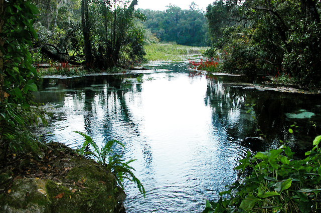 Bog at Rainbow Springs State Park, The Rainbow River, Dunnellon Florida